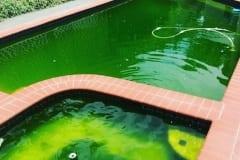 green pool 10