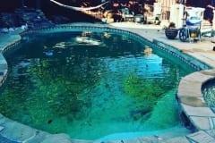 green pool 11